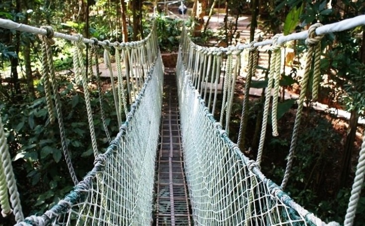简介:勐腊原始森林近500万亩,素有绿色宝地之称。在距勐腊20公里补蛙原始湿润雨林内,生长着高40-70多米高的望天树,架设在望天树上的空中走廊,全长2.5公里,它把公路两旁的原始森林连接起来,可在广阔的视野上尽情地领略热带雨林的奇异风光。沿着密林中的潺潺溪流,钻入幽深沟谷,观赏千姿百态的热带植物群落,森林里还生存着野象、野牛、长臂猿等动物30多种;生长着竹柏、石梓、苏铁、云南鸡毛松、西双版纳团花树等十多种珍贵树木,并有珍贵药用植物马前子、美橙木,花叶龙血树等30多种。