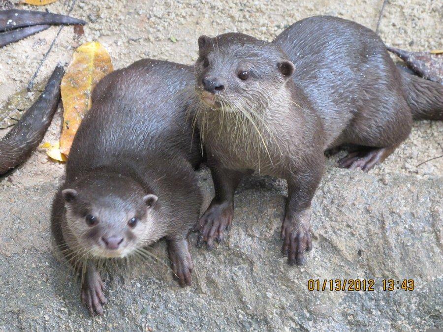 新加坡动物园旅游-新加坡动物园旅游景点-新加坡动物
