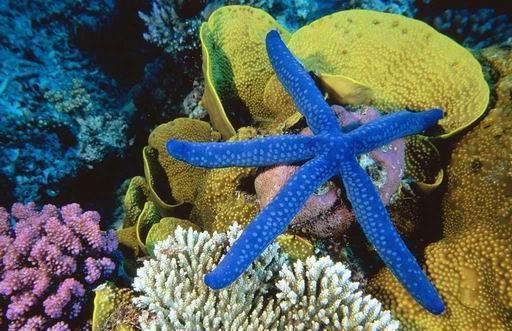 海南 三亚 > 海底世界   海底世界特价门票 海底世界美图