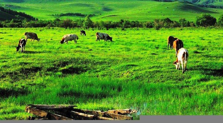 杜尔伯特靠山草原图片