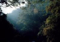 新化天气预报_大熊山森林公园天气,湖南大熊山森林公园天气预报查询一周,7天 ...